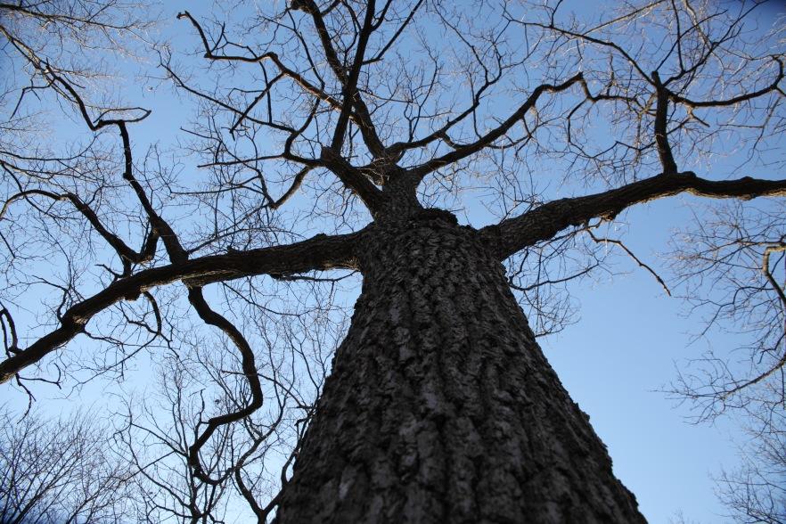 Tree Gesture 3